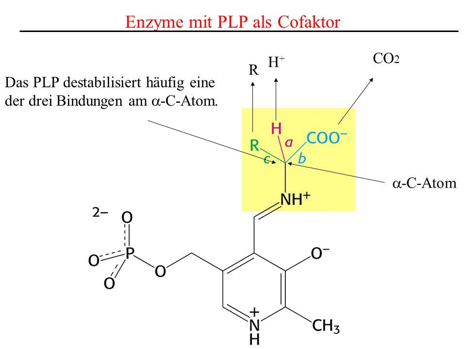 Enzyme mit PLP als Cofaktor