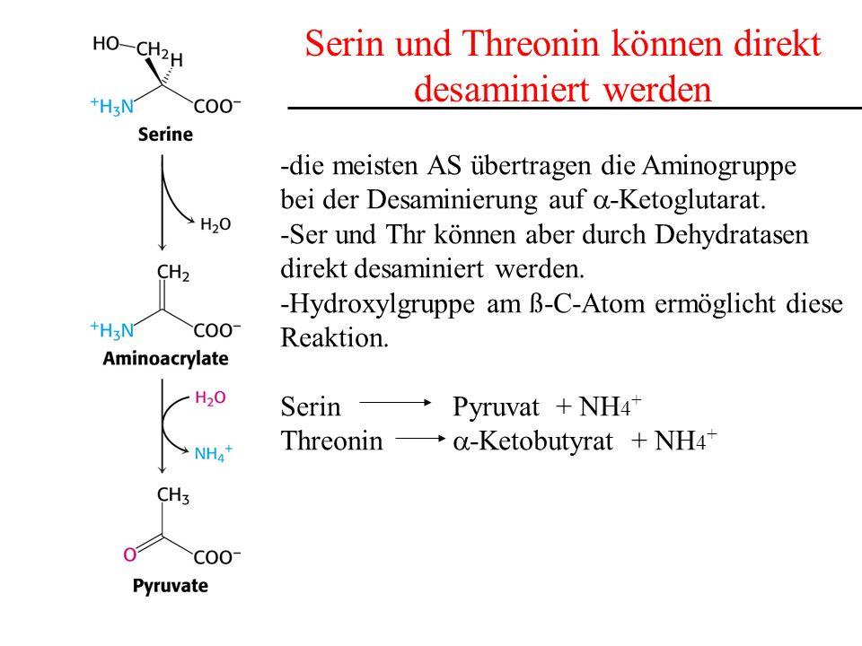 Serin und Threonin können direkt