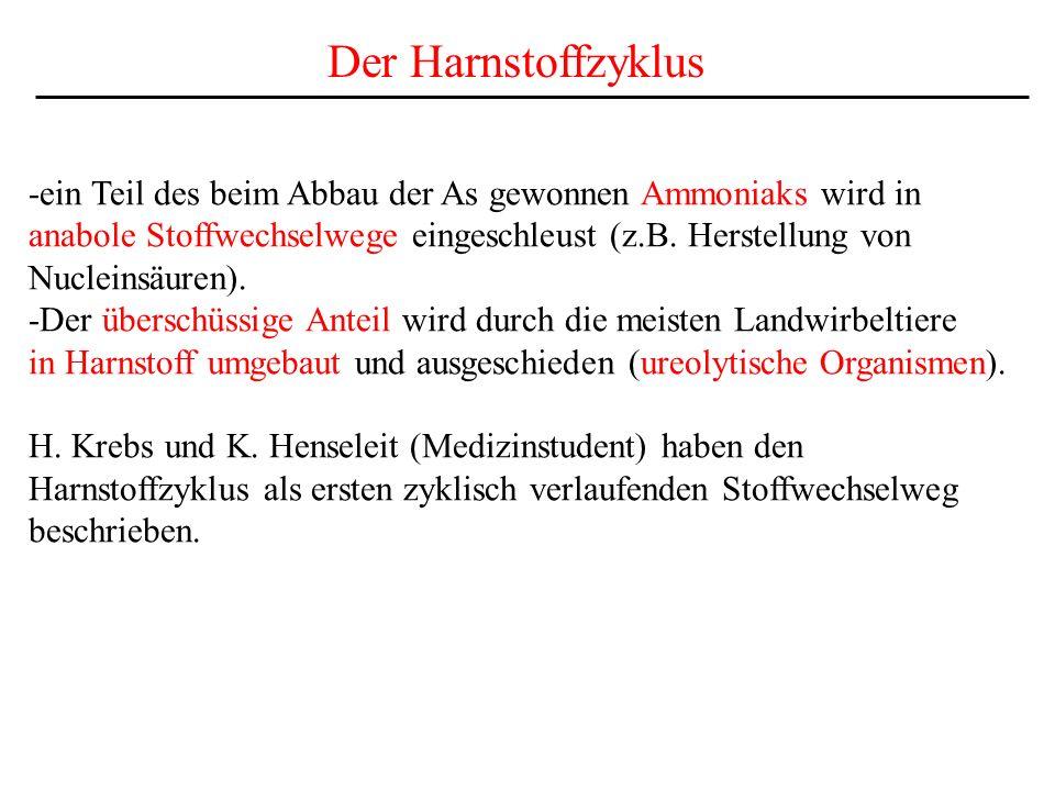 Der Harnstoffzyklus -ein Teil des beim Abbau der As gewonnen Ammoniaks wird in. anabole Stoffwechselwege eingeschleust (z.B. Herstellung von.