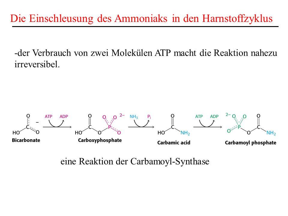 Die Einschleusung des Ammoniaks in den Harnstoffzyklus