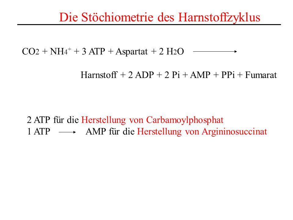 Die Stöchiometrie des Harnstoffzyklus