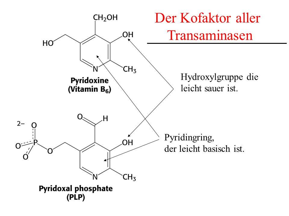 Der Kofaktor aller Transaminasen Hydroxylgruppe die leicht sauer ist.