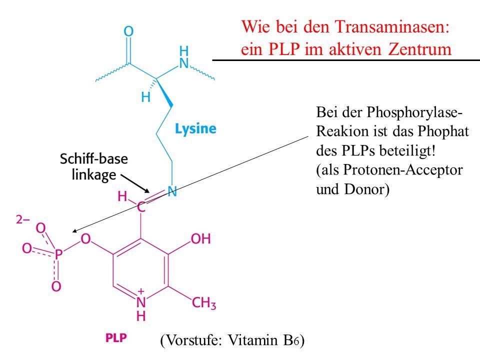 Wie bei den Transaminasen: ein PLP im aktiven Zentrum