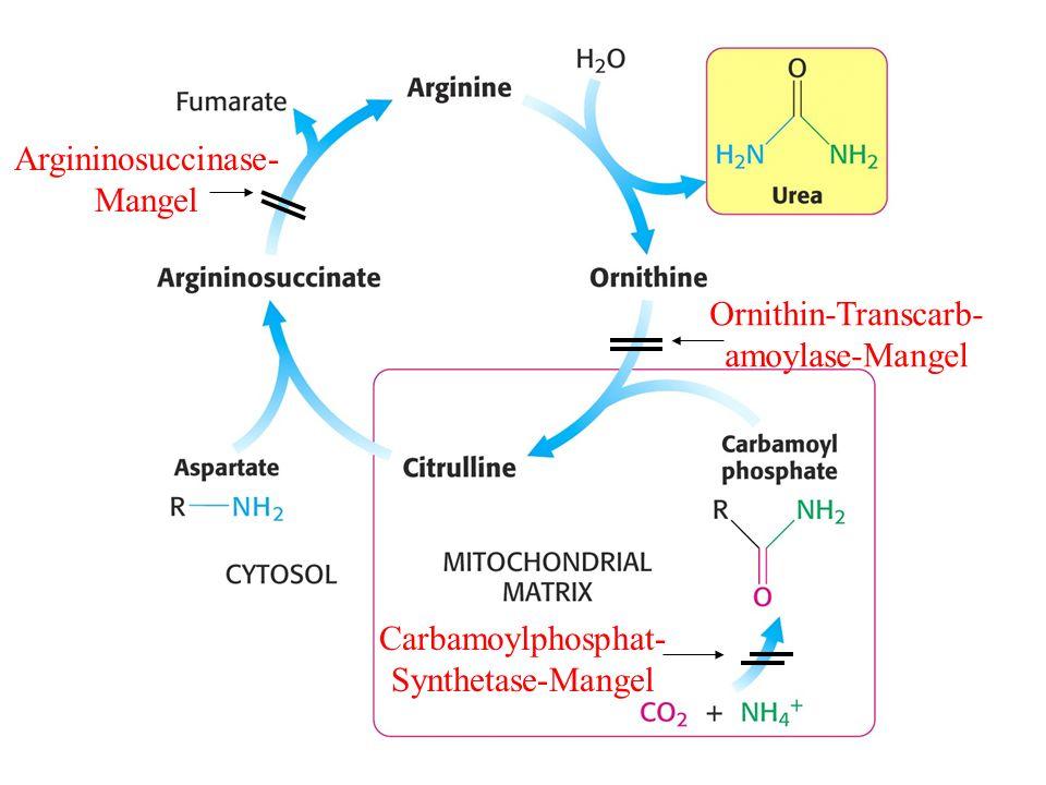Argininosuccinase- Mangel Ornithin-Transcarb- amoylase-Mangel Carbamoylphosphat- Synthetase-Mangel