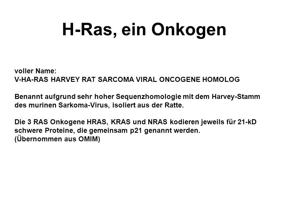 H-Ras, ein Onkogen voller Name: