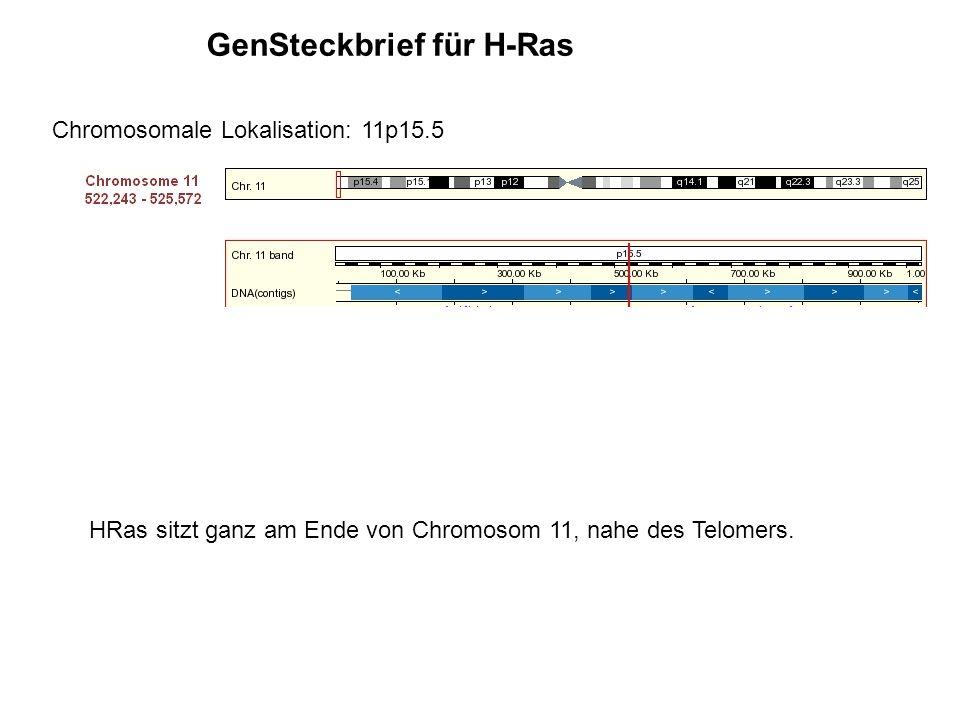GenSteckbrief für H-Ras