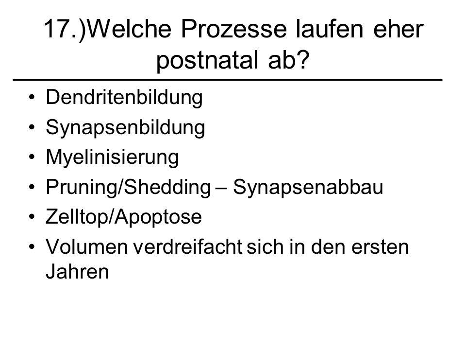 17.)Welche Prozesse laufen eher postnatal ab