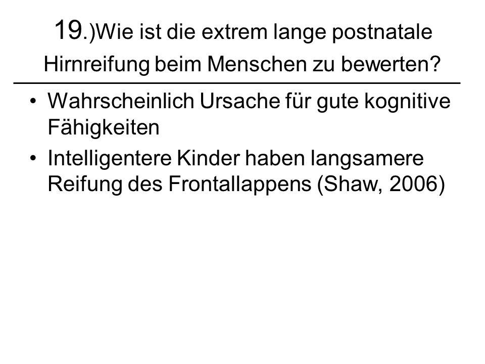 19.)Wie ist die extrem lange postnatale Hirnreifung beim Menschen zu bewerten