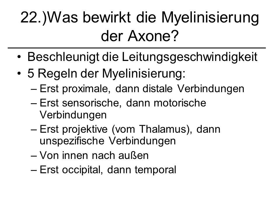 22.)Was bewirkt die Myelinisierung der Axone