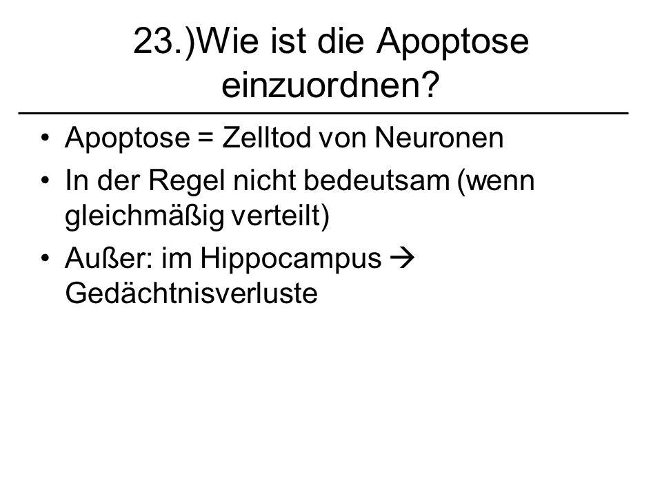 23.)Wie ist die Apoptose einzuordnen