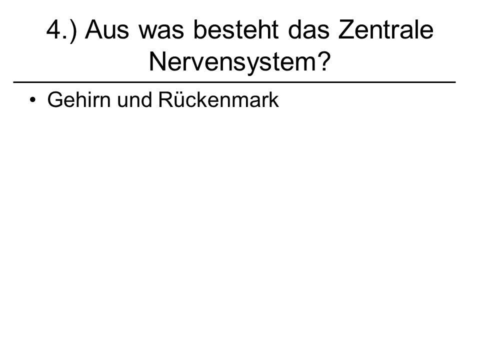 4.) Aus was besteht das Zentrale Nervensystem