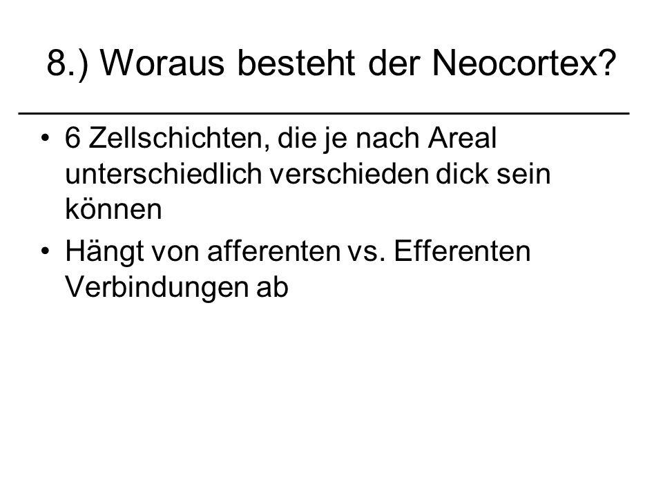 8.) Woraus besteht der Neocortex