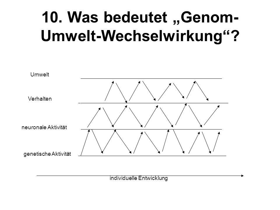 """10. Was bedeutet """"Genom-Umwelt-Wechselwirkung"""