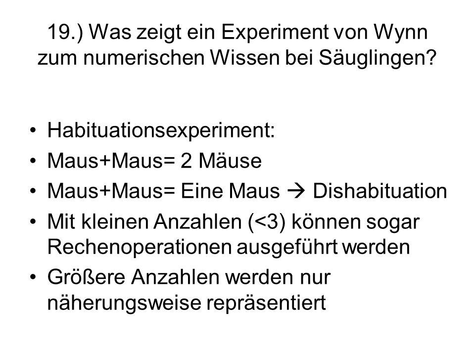 19.) Was zeigt ein Experiment von Wynn zum numerischen Wissen bei Säuglingen