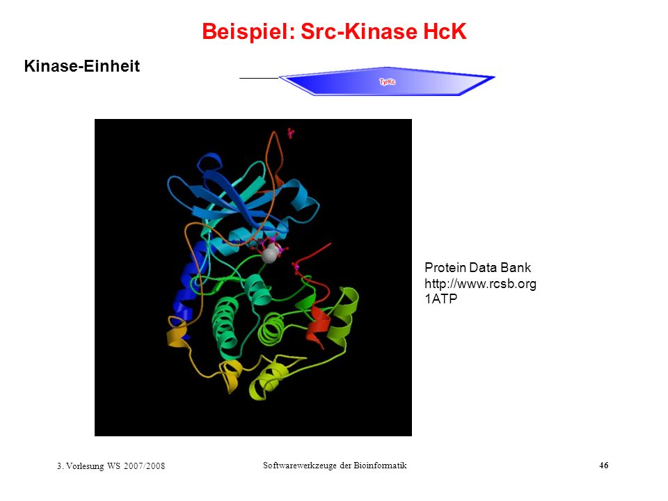 Beispiel: Src-Kinase HcK