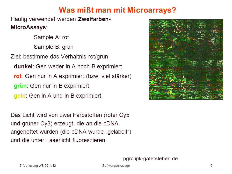 Was mißt man mit Microarrays