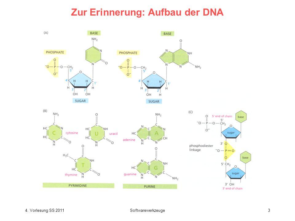 Zur Erinnerung: Aufbau der DNA