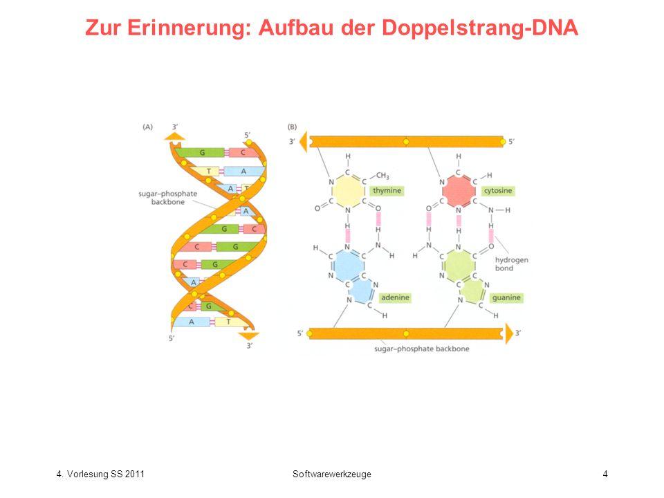 Zur Erinnerung: Aufbau der Doppelstrang-DNA