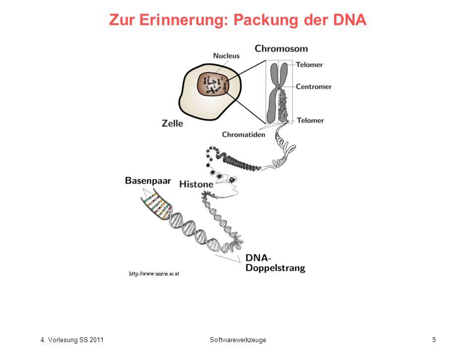 Zur Erinnerung: Packung der DNA