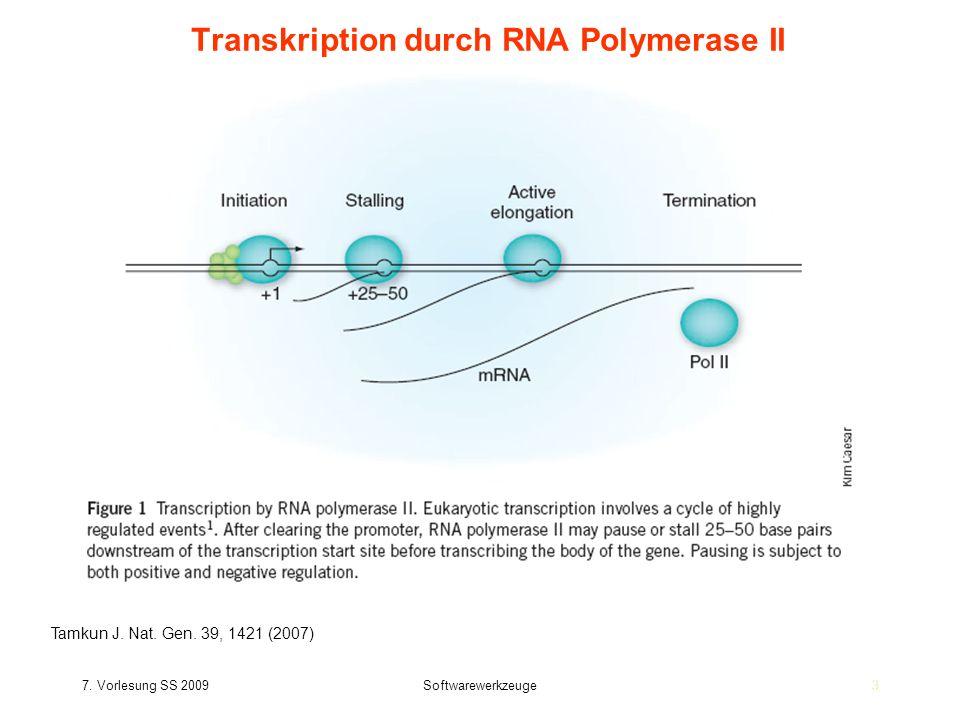 Transkription durch RNA Polymerase II