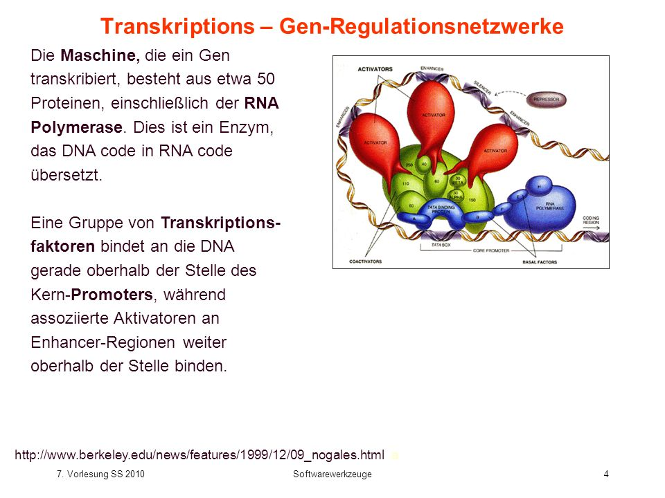 Transkriptions – Gen-Regulationsnetzwerke