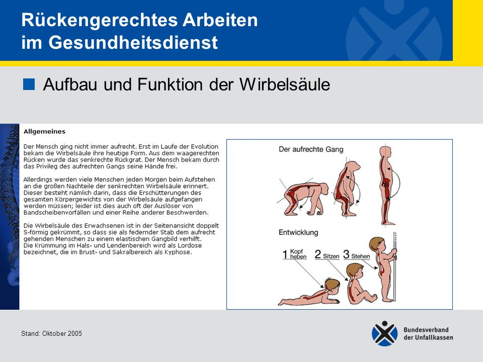 Niedlich Wirbelsäule Disk Nummern Bilder - Menschliche Anatomie ...