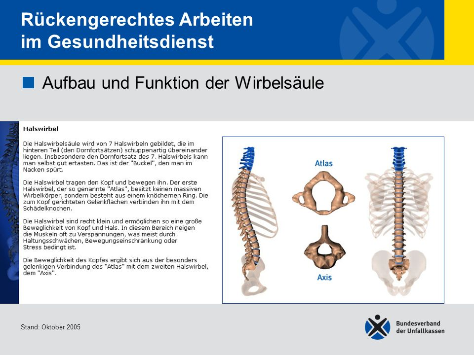 Groß Endokrinen Systems Funktionen Ideen - Menschliche Anatomie ...