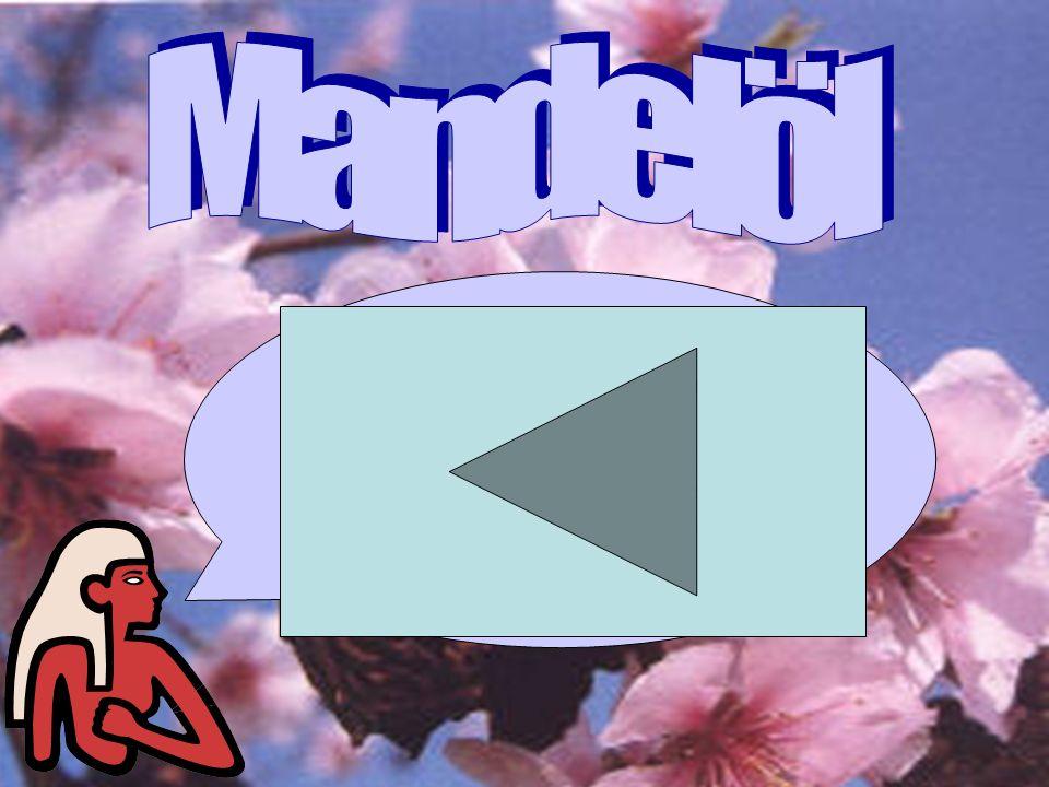 Mandelöl Mandelöl gehört zu den klassischen Kosmetikölen. Schon im Altertum fand es dafür Verwendung.