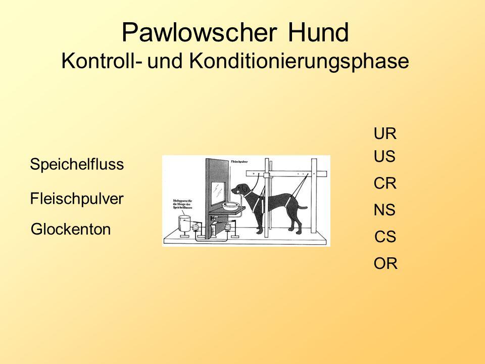 Pawlowscher Hund Kontroll- und Konditionierungsphase