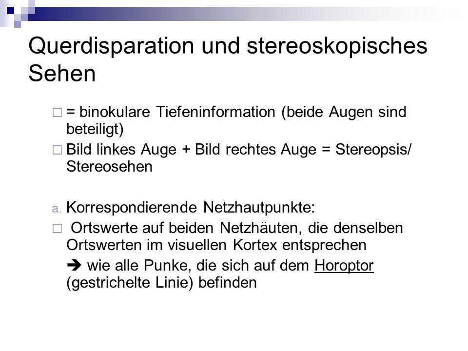 Querdisparation und stereoskopisches Sehen