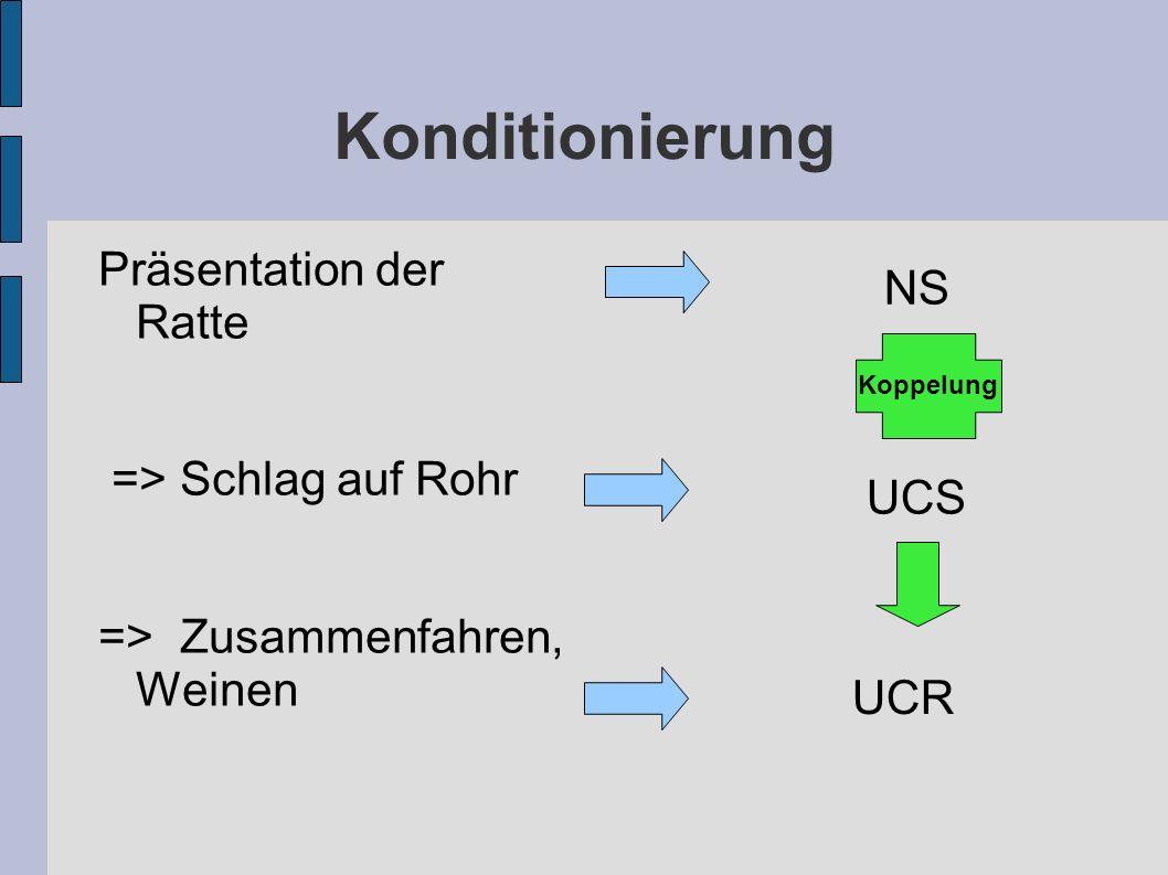 Konditionierung NS Präsentation der Ratte UCS => Schlag auf Rohr