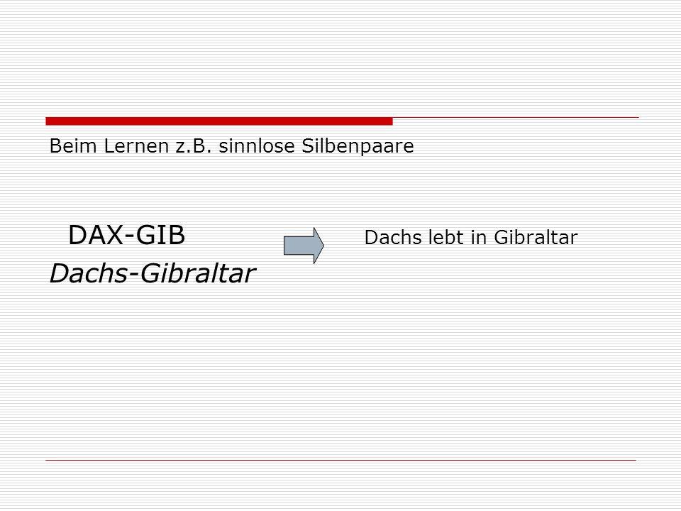 DAX-GIB Dachs lebt in Gibraltar Dachs-Gibraltar