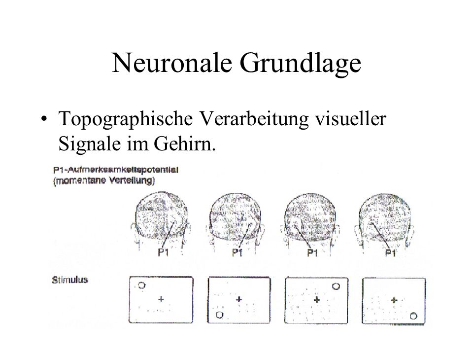 Neuronale Grundlage Topographische Verarbeitung visueller Signale im Gehirn.