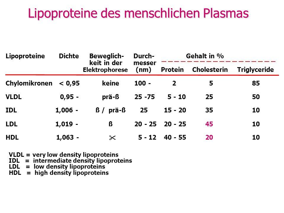 Lipoproteine des menschlichen Plasmas