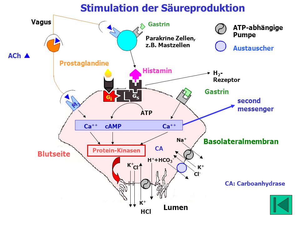 Stimulation der Säureproduktion