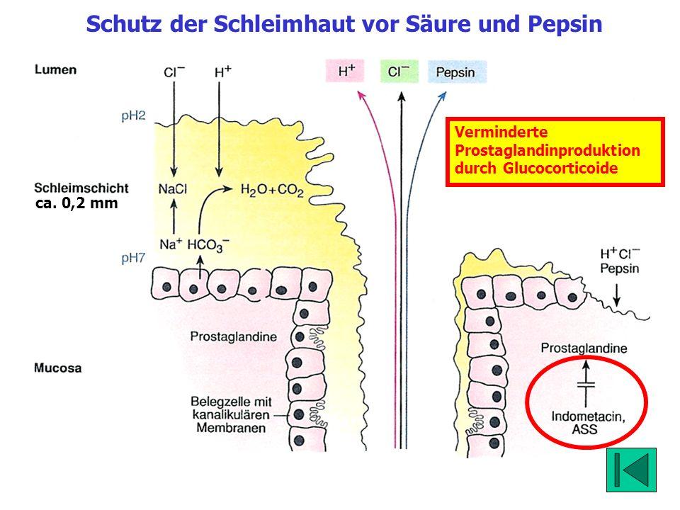 Schutz der Schleimhaut vor Säure und Pepsin
