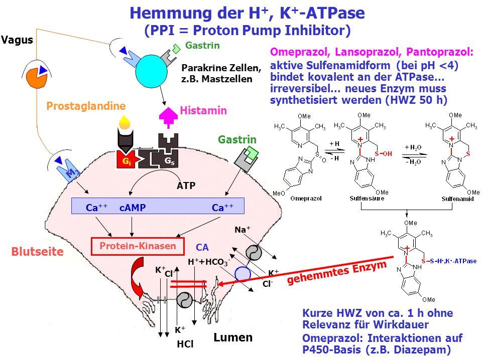 Hemmung der H+, K+-ATPase (PPI = Proton Pump Inhibitor)