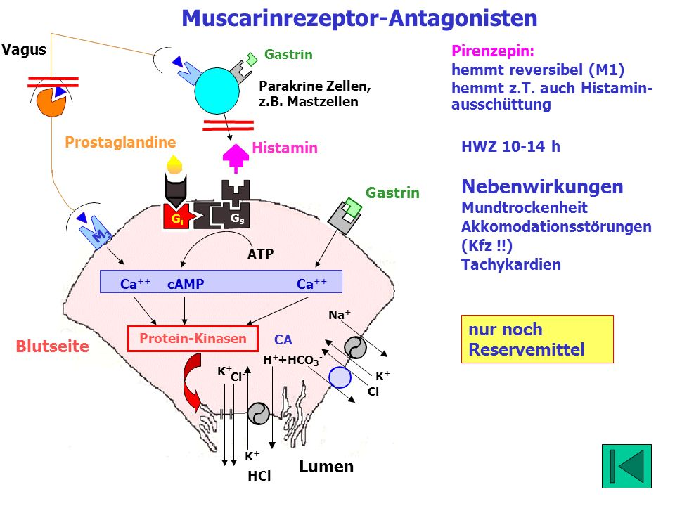 Muscarinrezeptor-Antagonisten