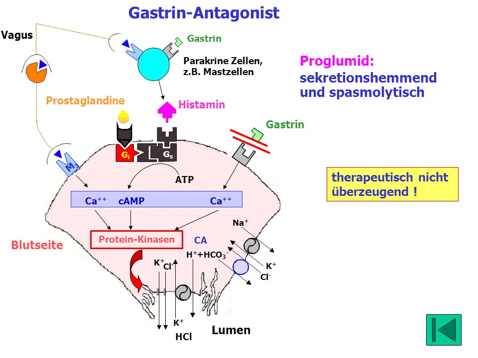 Gastrin-Antagonist Proglumid: sekretionshemmend und spasmolytisch