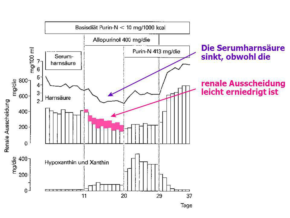 Die Serumharnsäure sinkt, obwohl die renale Ausscheidung leicht erniedrigt ist