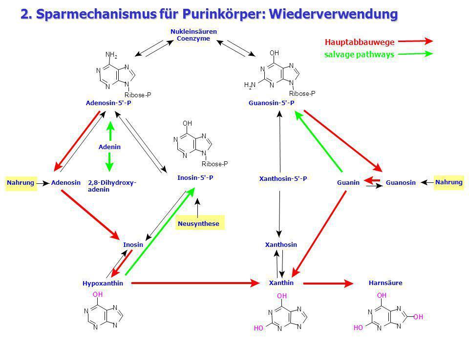 2. Sparmechanismus für Purinkörper: Wiederverwendung
