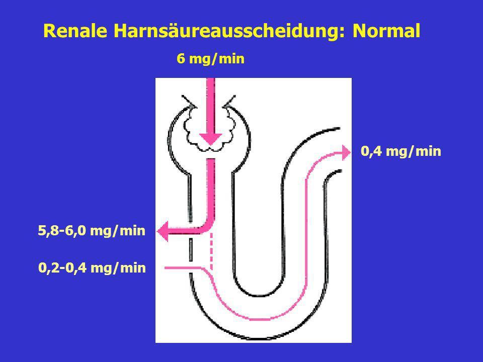 Renale Harnsäureausscheidung: Normal