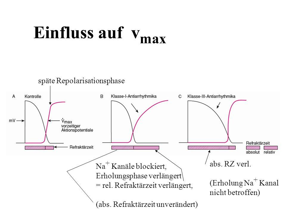 Einfluss auf vmax späte Repolarisationsphase abs. RZ verl.