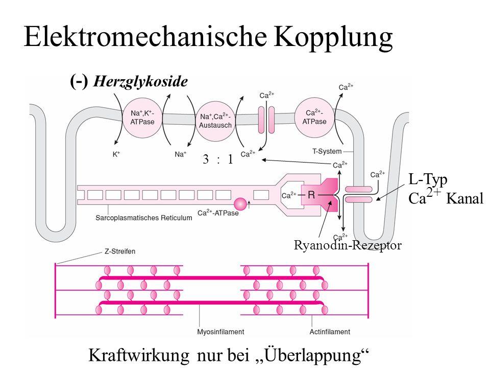 Elektromechanische Kopplung