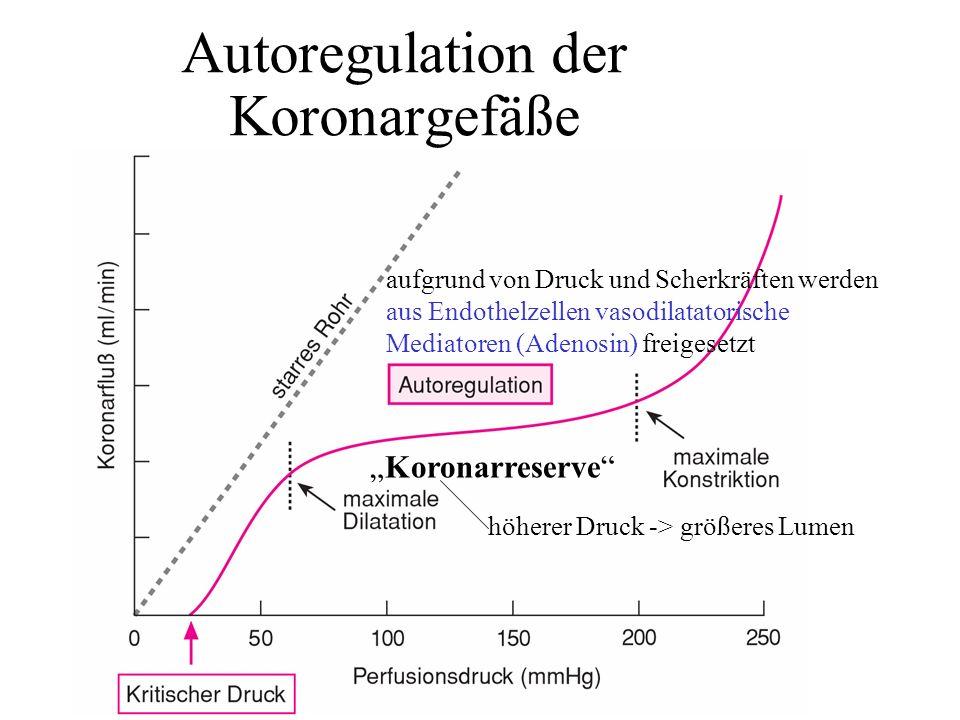 Autoregulation der Koronargefäße