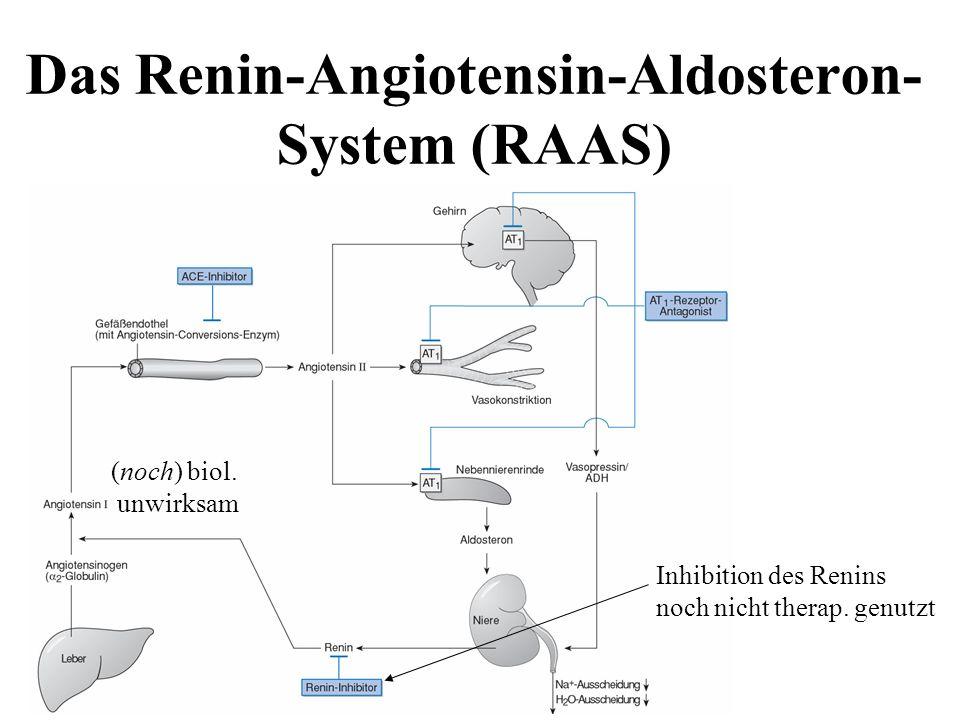 Das Renin-Angiotensin-Aldosteron-System (RAAS)