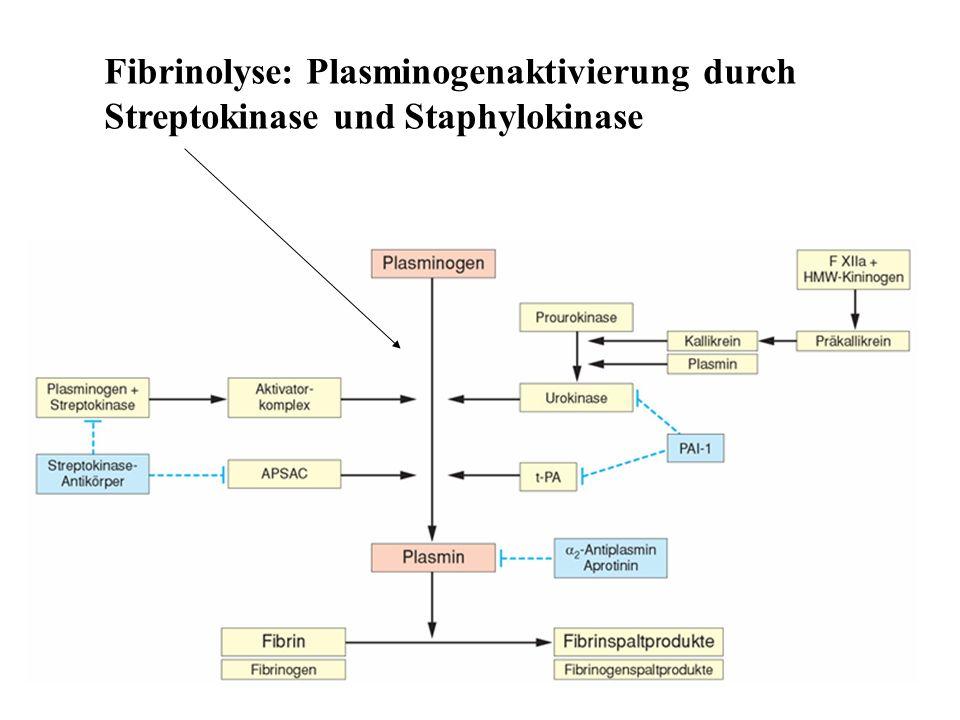 Fibrinolyse: Plasminogenaktivierung durch