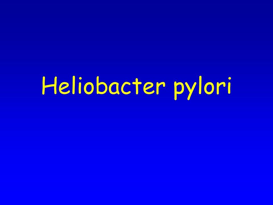 Heliobacter pylori