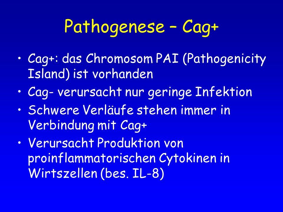 Pathogenese – Cag+ Cag+: das Chromosom PAI (Pathogenicity Island) ist vorhanden. Cag- verursacht nur geringe Infektion.
