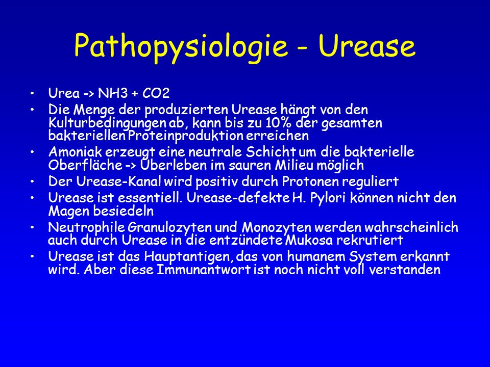 Pathopysiologie - Urease